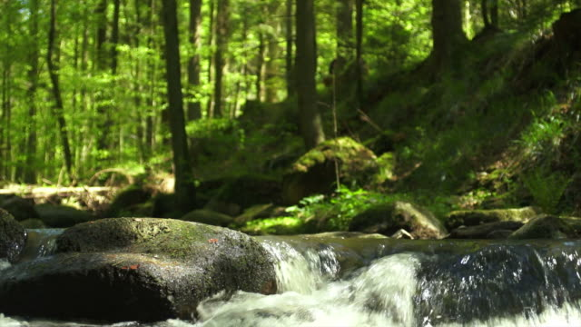 slow mo stream iin spring forest dolly shot - flowing water stock videos & royalty-free footage