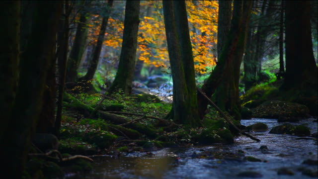 stream in autumn forest (loopable) - spring flowing water stock videos and b-roll footage