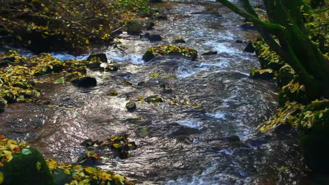 HD-Stream im Herbst Wald (Endlos wiederholbar