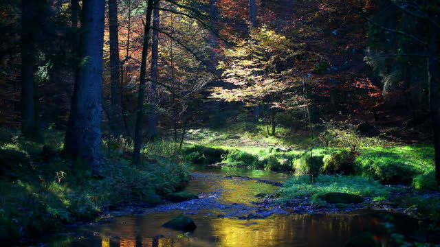HD Stream in Autumn Forest (Loopable)