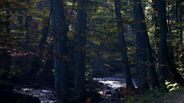 vídeos de stock, filmes e b-roll de fluxo em hd no outono floresta - floresta da bavária