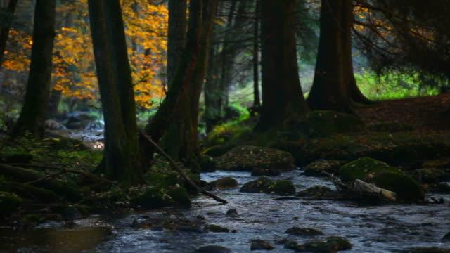 vídeos de stock, filmes e b-roll de fluxo em hd no outono floresta (efeito - floresta da bavária