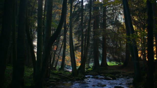 vídeos de stock, filmes e b-roll de fluxo em hd no outono floresta (circulares - floresta da bavária
