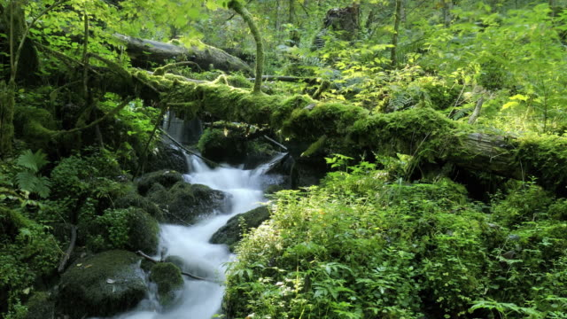 vídeos de stock, filmes e b-roll de stream in forest catches sunlight - riacho