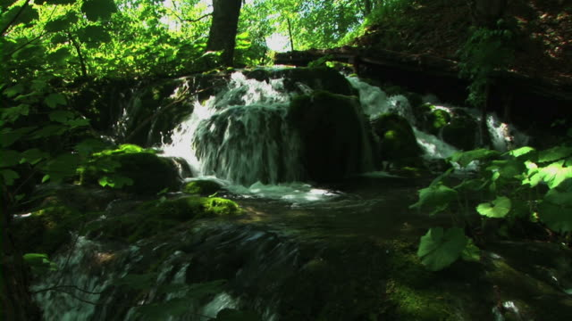 stockvideo's en b-roll-footage met stream in forest - uitfaden