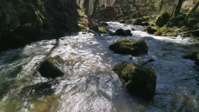 vídeos y material grabado en eventos de stock de stream in forest - baden wurttemberg