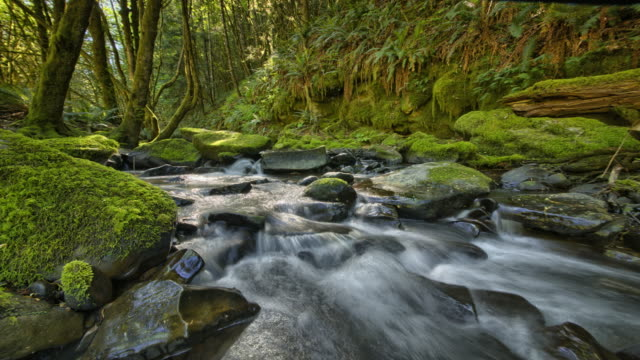 stream in forest with moss and ferns - high dynamic range imaging stock videos and b-roll footage