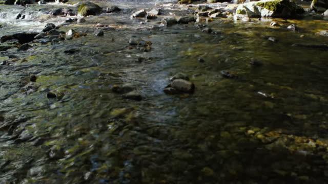 vídeos de stock e filmes b-roll de stream in forest,northern ireland - copa da árvore