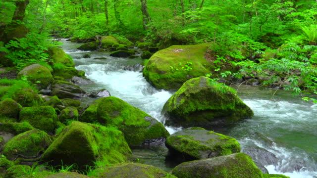 stream in green forest - oirase river,aomori - aomori prefecture stock videos & royalty-free footage