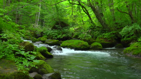 stream in green forest - oirase river,aomori - stream stock videos & royalty-free footage