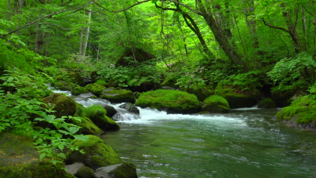 stream in green forest - oirase river,aomori - lush video stock e b–roll