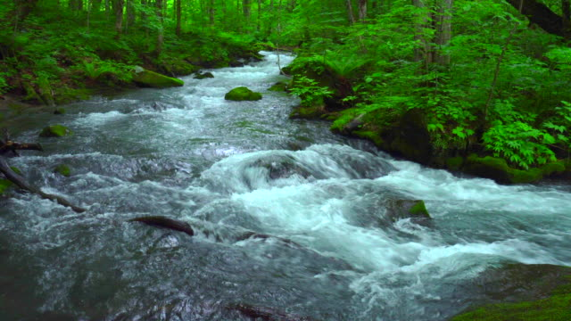 stream in green forest - oirase river,aomori - river green stock videos & royalty-free footage