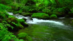 Stream in green forest - Oirase river,Aomori