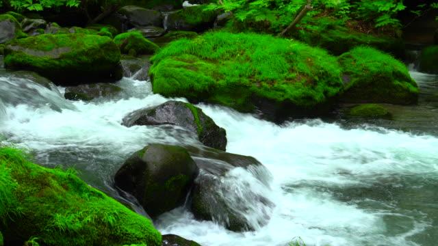 緑の森の奥入瀬川、青森でストリーム - 流れる点の映像素材/bロール