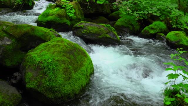 緑の森の奥入瀬川、青森でストリーム - 小川点の映像素材/bロール
