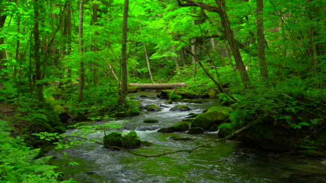 stream in green forest - oirase river,aomori - satoyama scenery stock videos & royalty-free footage