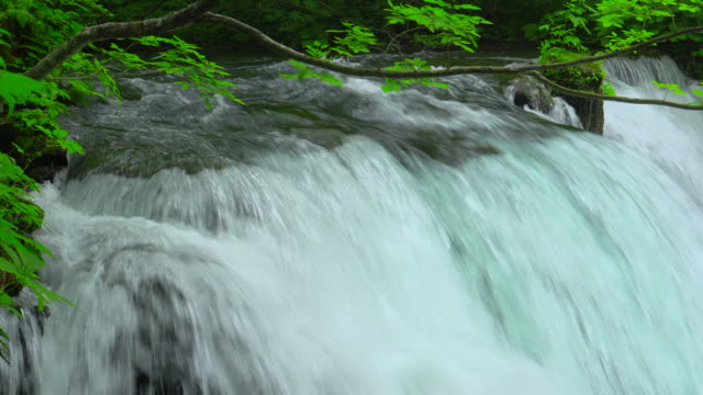 stream in green forest - oirase river,aomori - spring flowing water stock videos & royalty-free footage