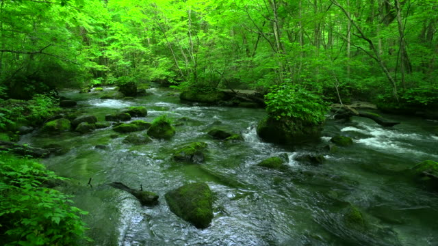 stream in green forest - oirase river,aomori - moss stock videos & royalty-free footage