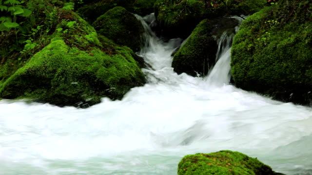 Ruisseau dans la forêt verte-Son