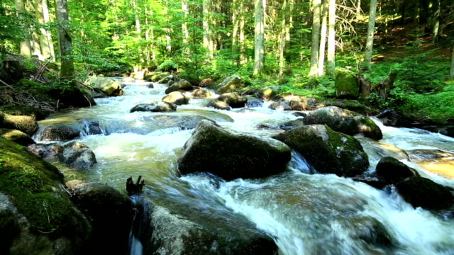 Stream in Green Forest PAN TL