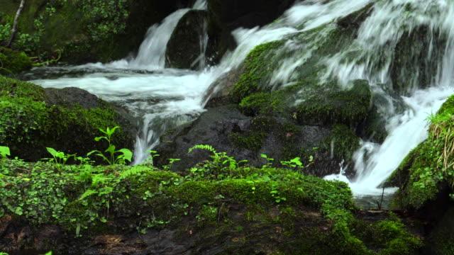 緑の森林ストリーム - 石点の映像素材/bロール