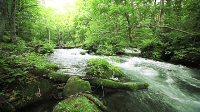 stockvideo's en b-roll-footage met stream in green forest - stromend water