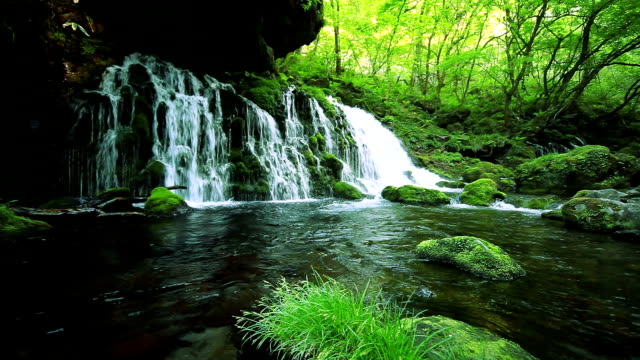 stream in green forest - springtime stock videos & royalty-free footage