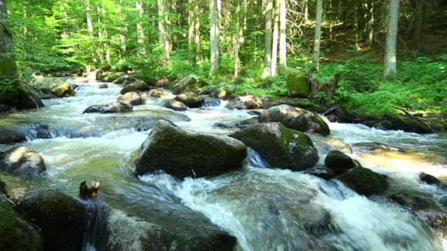 pan stream in green forest - ruscello video stock e b–roll