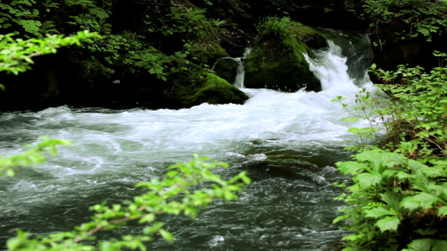stream in green forest - cascade range stock videos & royalty-free footage