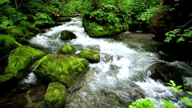 ストリームの緑の森 - 小川点の映像素材/bロール
