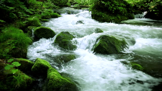 stream in green forest - plusphoto stock videos & royalty-free footage