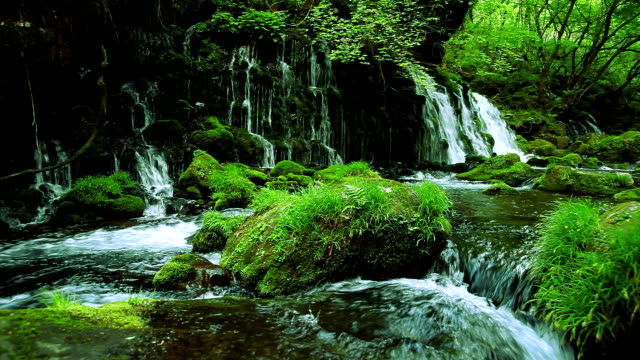 Ruisseau dans la forêt verte