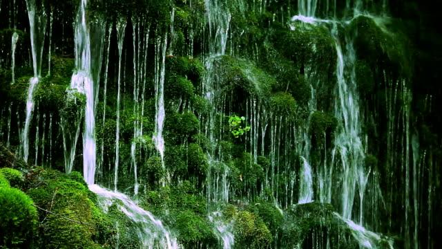 Fluxo em verde floresta