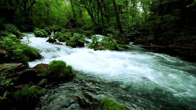 stockvideo's en b-roll-footage met stream in green forest - stroom stromend water