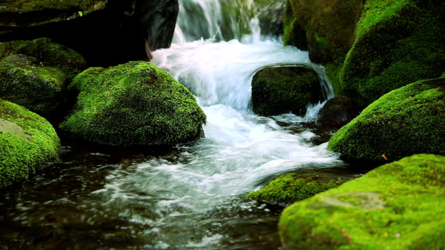 stream in green forest - waterfall stock videos & royalty-free footage