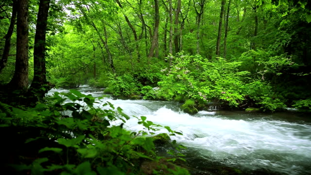 stream in green forest - oirase river stock videos & royalty-free footage