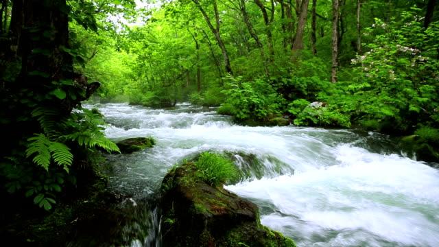 vidéos et rushes de ruisseau dans la forêt verte - eau vive