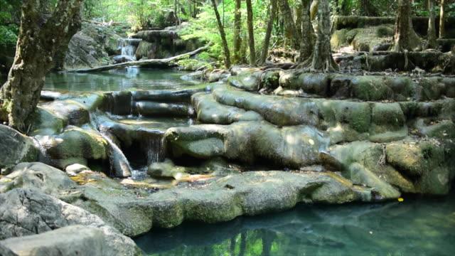 vídeos de stock, filmes e b-roll de fluxo em verde floresta - curso de água