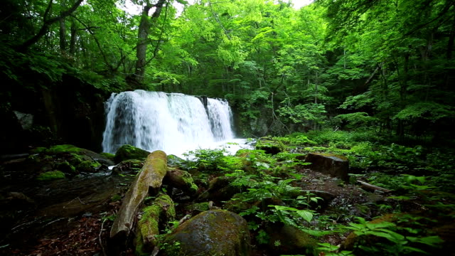 stream in green forest,cyoushiootaki - oirase river stock videos & royalty-free footage