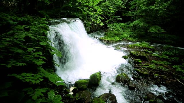 Ruisseau dans la forêt verte, Cyoushiootaki