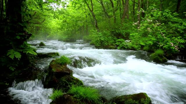 stream im grünen wald, dolly shot - moos stock-videos und b-roll-filmmaterial