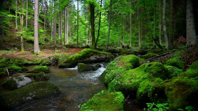 Stream im Rocky Frühling Wald Kamerafahrt mit Dolly