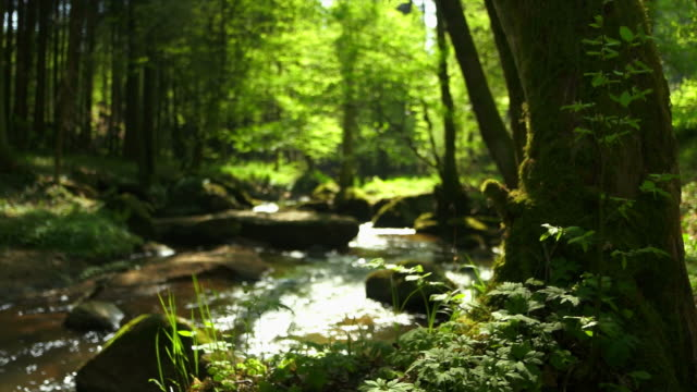 stream in spring forest dolly shot - ecosystem stock videos & royalty-free footage