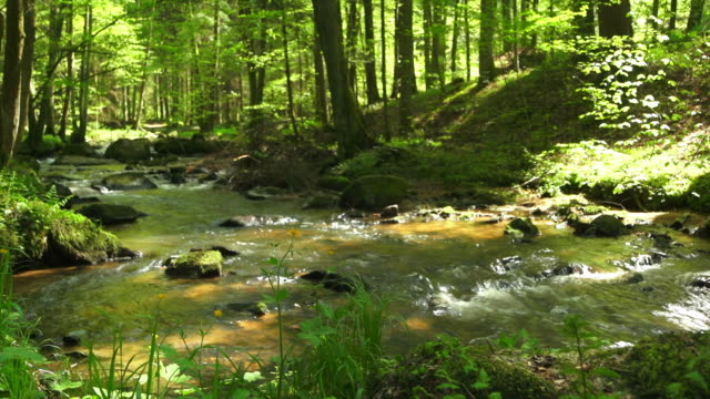hd stream in spring forest dolly shot - idyllic stock videos & royalty-free footage