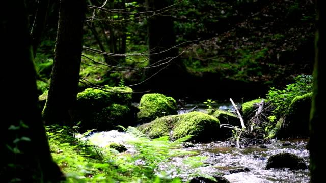 Streaming HD dans la forêt de printemps Travelling sur chariot