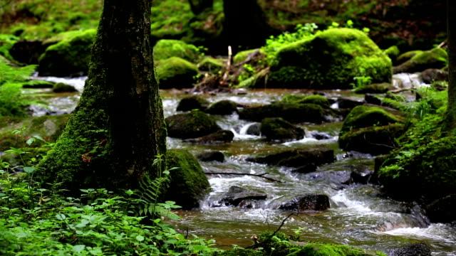 vídeos de stock, filmes e b-roll de fluxo em hd na spring forest câmera em movimento - floresta da bavária