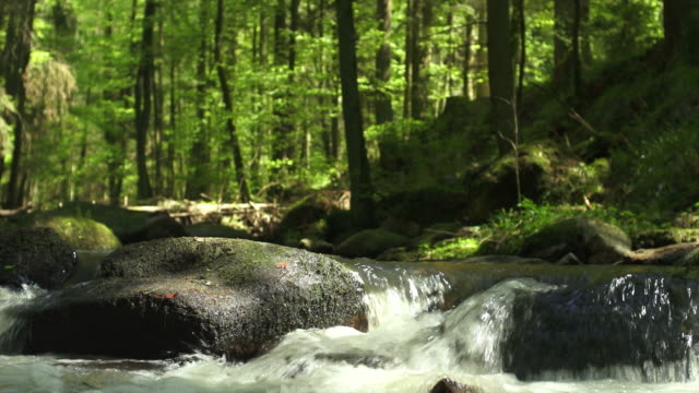 hd stream in spring forest - stream stock videos & royalty-free footage