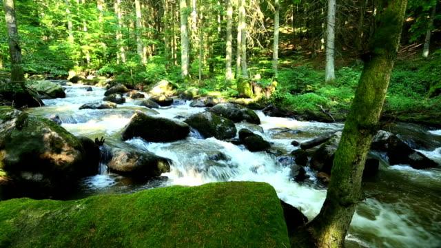 vídeos de stock, filmes e b-roll de stream na spring forest pan - floresta da bavária