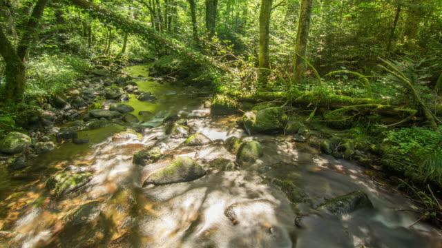 stream in summer forest