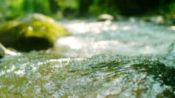 SLO MO Stream in the forest